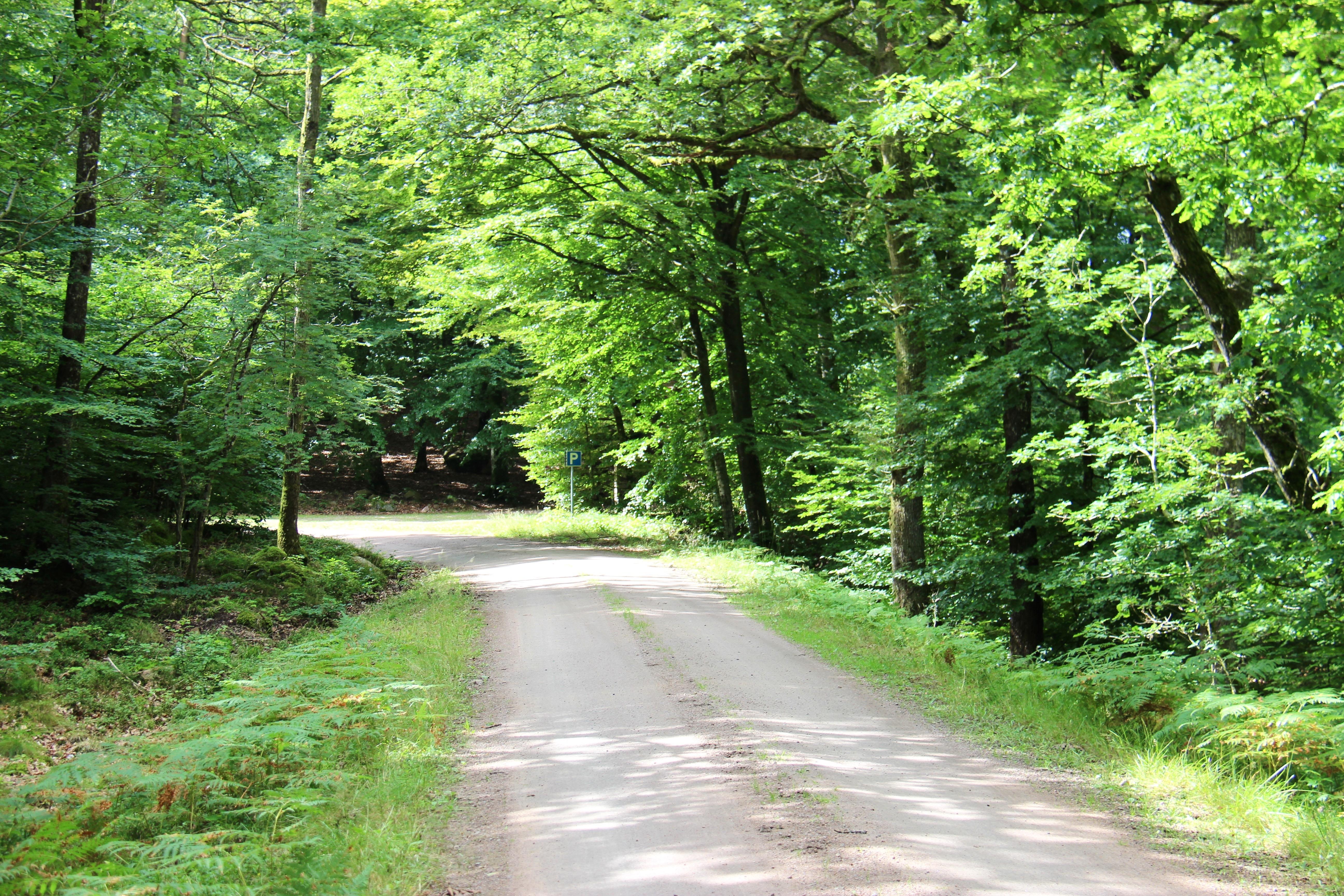 Väg som går genom skog, stoppskylt längst bort